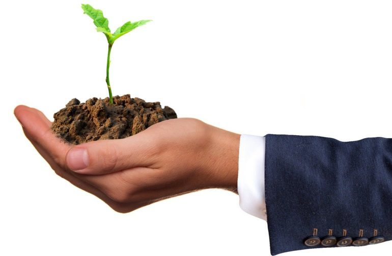 Man holding a small sapling