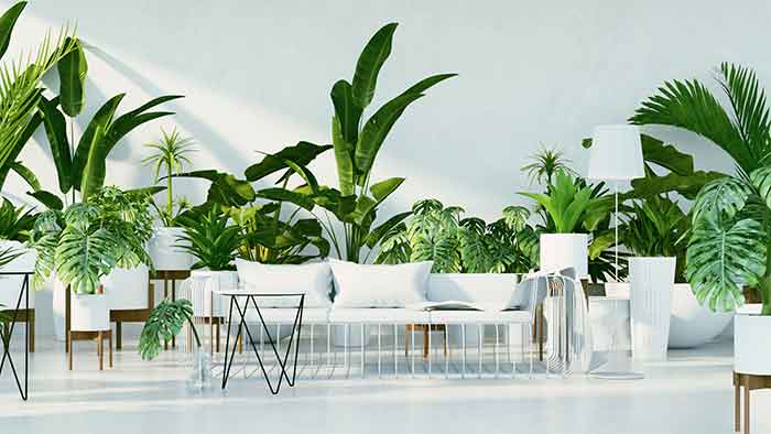 Bright green plants in a white themed lving area