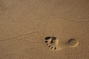 Footprint in the sand