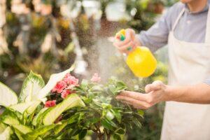 Gardener spraying flowering plants